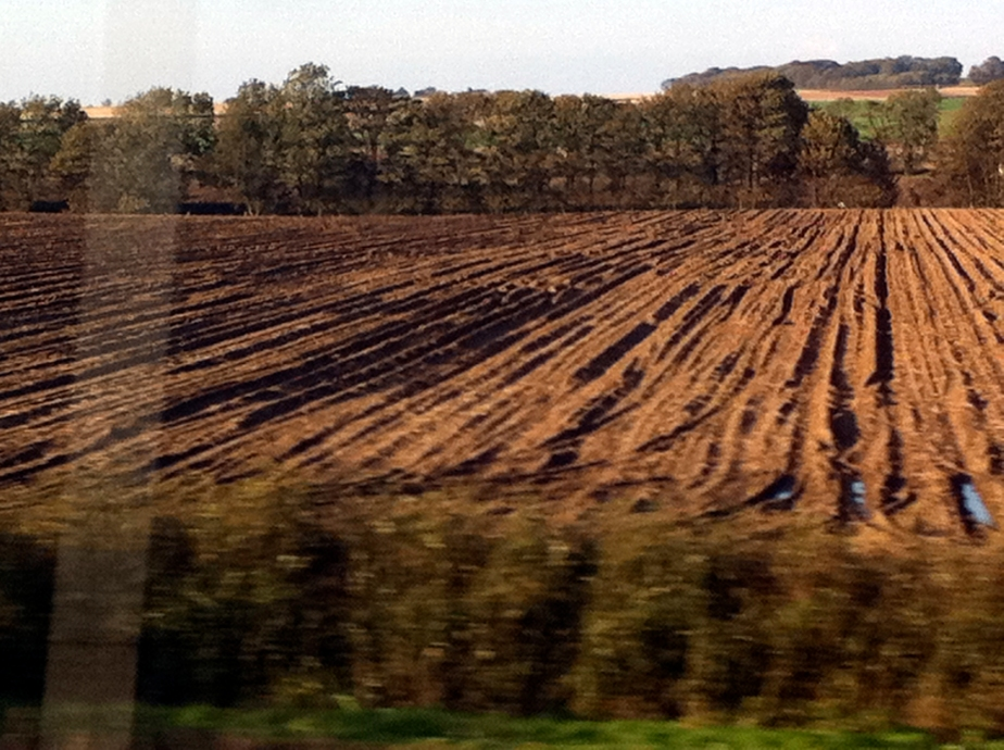 Shadows on a ploughed field