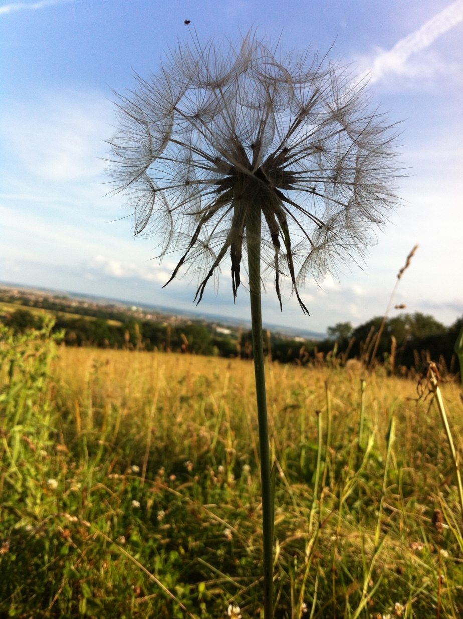 Vapour Trails and SeedHeads
