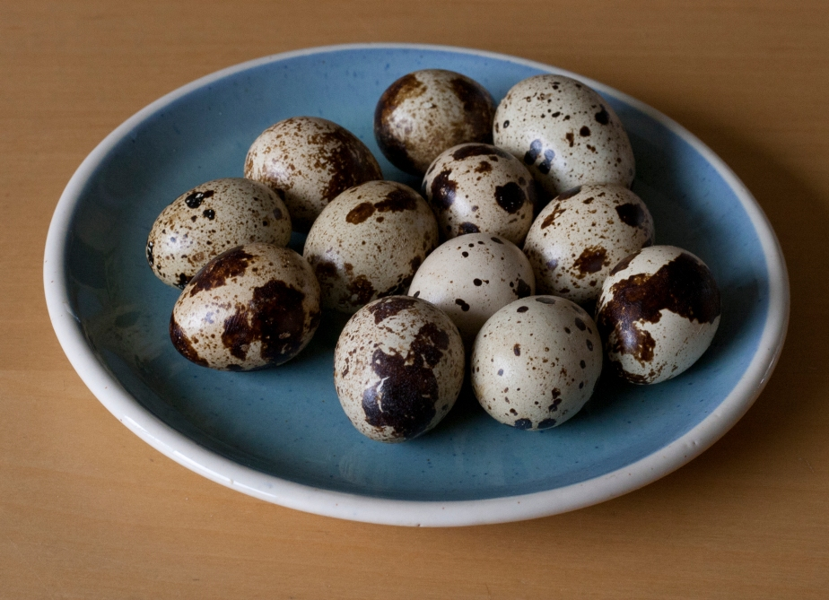 Quails Eggs on a blue plate