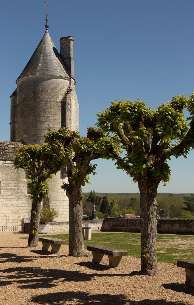 Chateau de Loches - French pollarding