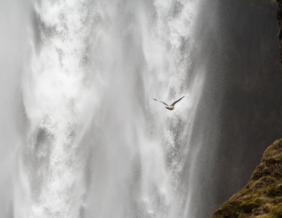 Birds love this fast flowing waterfall, they can't resist flying past again and again.