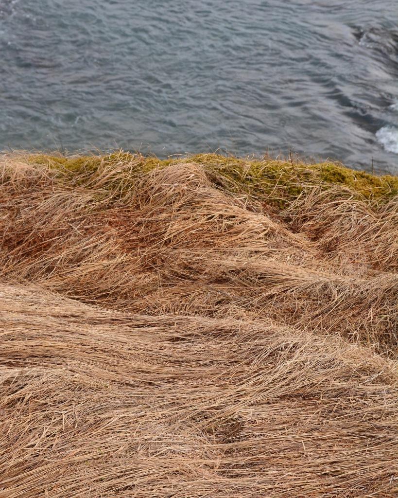 iceland grasses