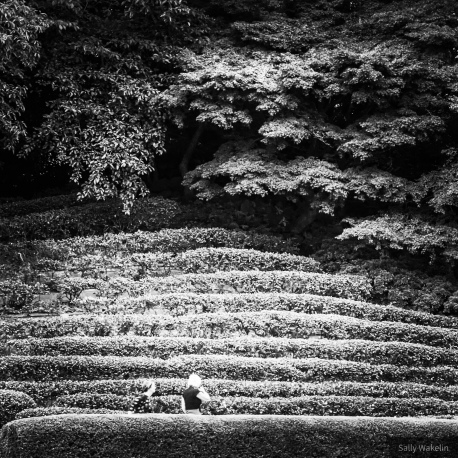 Rows of hedges defining slopes within the Imperial Palace Gardens in Tokyo.